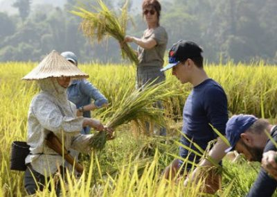 vietnamnewsletter