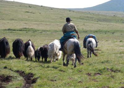 mongolie-p1010560-600