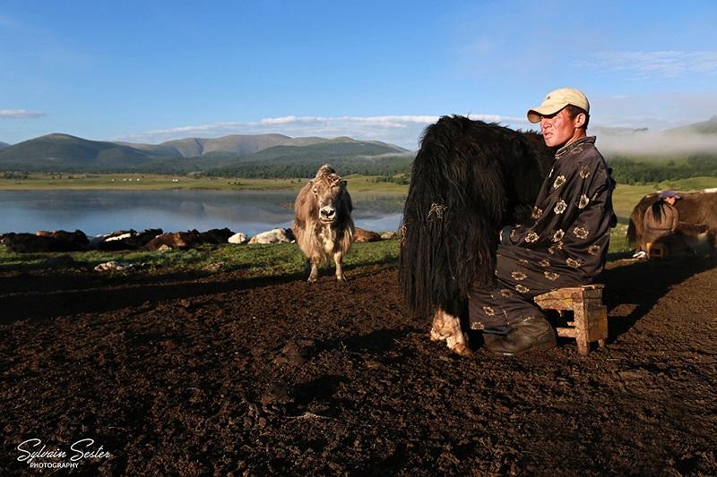 mongolie-sester-traite-800