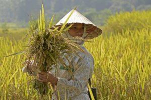 voyage solidaire Vietnam