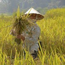 Vietnam rando thaï