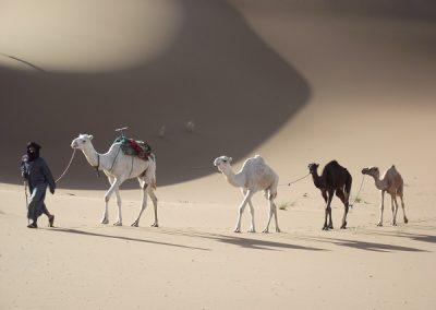 maroc-desert-zahar-dunes-4172-600