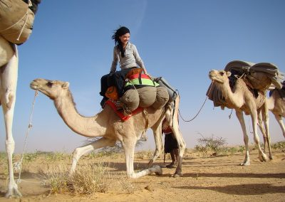 mauritanie-chameau-se-leve-800