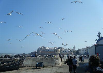 maroc-liberte-essaouira-ville-600
