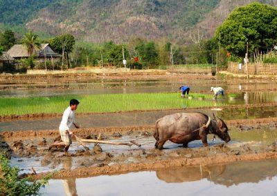 vietnam-11-15j-labour-1040302