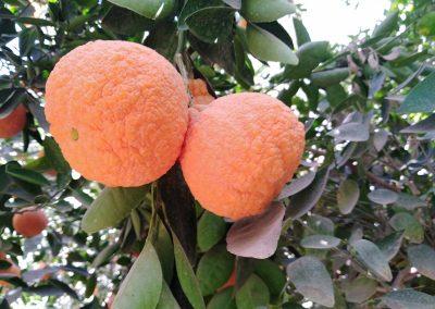 niger-2018-timia-oranges