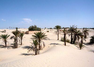 tunisie-palmeraie-800