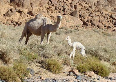 algerie-hoggar-petit-800